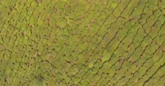 Aerial moving up shot to reveal tea plantations in Munnar, India Stock Footage