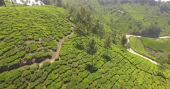 Aerial shot over trees and tea plantations in Munnar, India Stock Footage