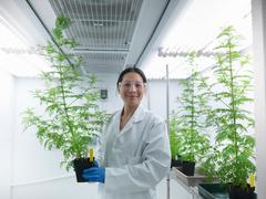 Portrait of scientist growing Sweet Wormwood (Artemisia annua) under artifical - stock photo