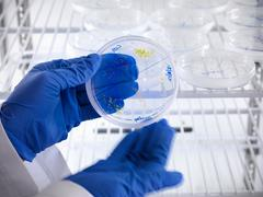 Close up of scientist removing seedling cultures from petri dish in biolab Stock Photos