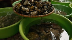 Fresh mussles, crabs, cockles, scallops for sale in a market place. Stock Footage