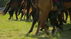 Line Of Brown Horses Walking In Circle Stock Footage