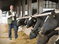 Portrait of farmer holding jug of milk with cows feeding in dairy shed Stock Photos