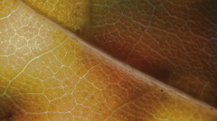 Colorful transitions for montage on the theme of plant leaf, flora and nature - stock footage
