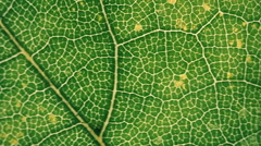 Fast transitions for montage on the theme of plant leaf, flora and nature. Macro - stock footage