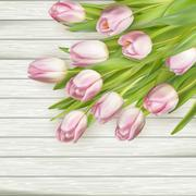 Beautiful pink tulips. EPS 10 - stock illustration