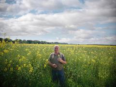 Portrait of farmer inspecting crop of oil seed rape (Brassica napus) in field Stock Photos