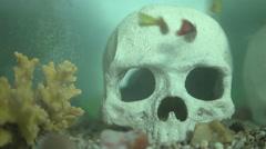 Aquarium fish in water - stock footage