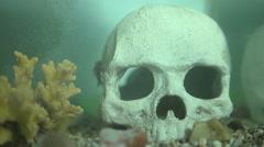 Aquarium fish in water Stock Footage