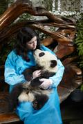 Woman holding 6 month old Giant Panda at Chengdu Panda Breeding Research Cent Stock Photos