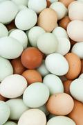 Large amount of eggs - stock photo