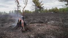 Sparse smoky wood just after forest fire. Stock Footage
