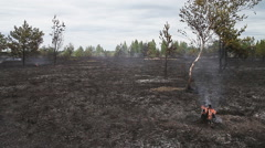 Sparse wood just after forest fire. - stock footage
