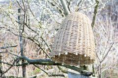 Handmade beehive to capture bee swarms in nature Stock Photos