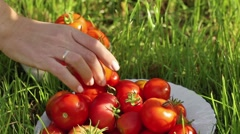 Red tomato in white bowl at the garden inside hothouse Stock Footage