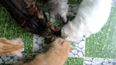 Top View of Group of Cats Eating form Same Bowl Stock Footage