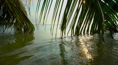 Colorful tropical landscape with palm branches in the ocean waves. - stock footage