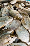 Dorade at fish market, Houmt Souk, Djerba, Tunisia - stock photo
