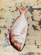 Dorade fish - stock photo
