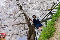 Girl with school uniform and cherry blossoms - stock photo