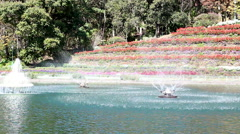 Swirl fountain in the pond in the park Stock Footage