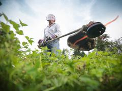 Stock Photo of Gardener wearing ear protectors and visor using strimmer