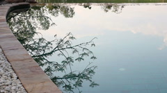 Reflection of the tree and bird on the swimming pool in the garden Stock Footage