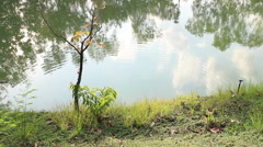 ripple on the surface of the pond in the park - stock footage