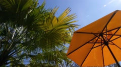 Palm Trees and Sunshade Umbrella on Tropical Beach Stock Footage