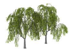 3D Illustration Green Willow on White Stock Illustration