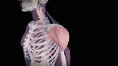 The human deltoid muscle Stock Footage