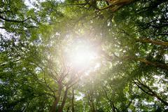 Sunlight through tree canopy Stock Photos