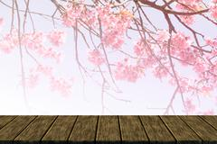 wild himalayan cherry flower (soft focus and color filter) - stock illustration