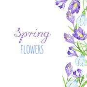 Early spring purple crocus and snowdrops nature beauty flowers vector - stock illustration