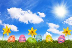 coloured Easter eggs on meadow with daffodils - stock illustration