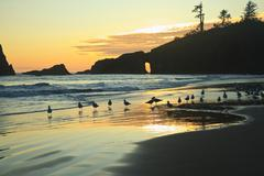 Stock Photo of Seagulls on Second Beach at sunset near La Push, Olympic National Park, Washi