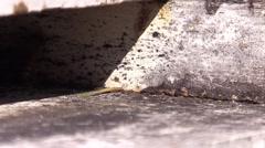 Honeybees bringing pollen to hive closeup Stock Footage