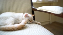 A female cat lies on the chair and somebody cares her Stock Footage