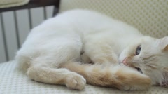 A female cat sleeps on chair - red point siamese Stock Footage