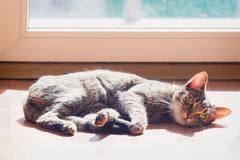 Lazy domestic cat warming in the sun by the window - stock photo