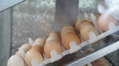 Video egg hatching machine close up view Stock Footage