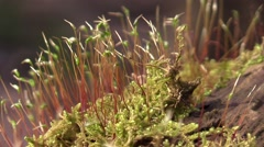 Flowering forest moss zoom out Stock Footage