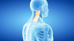 The cervical spine Stock Footage