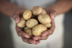 Close up of hands holding potatoes Stock Photos