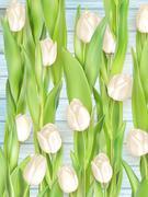 Stock Illustration of Bouquet of white tulips. EPS 10