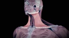 The isolated human platysma - stock footage