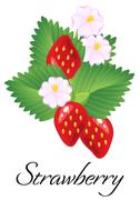 Ripe juicy red strawberries isolated with leaves and flowers. Vector Stock Illustration
