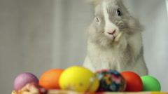 Easter Bunny with Easter eggs Stock Footage
