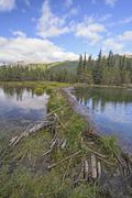 Beaver Dam on a Wilderness Lake Stock Photos