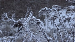 Snow covered grass sways in the wind - stock footage
